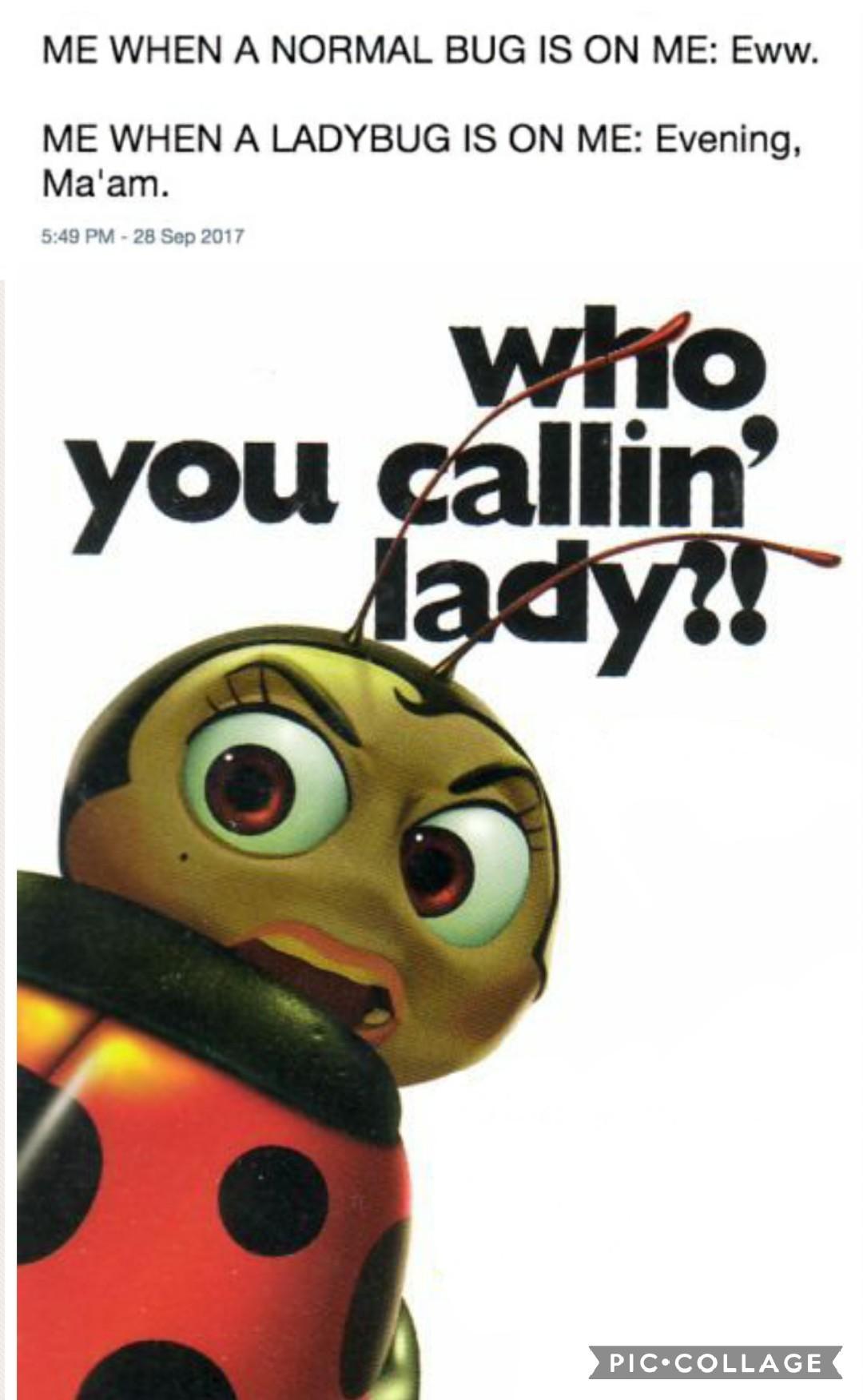 Bugs life - meme