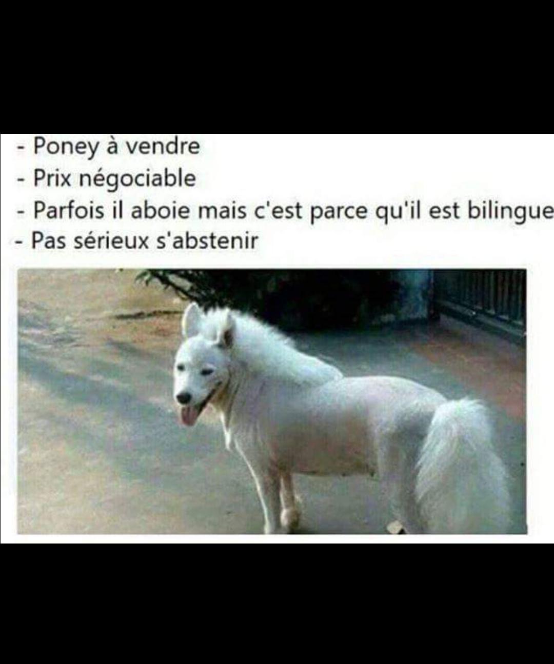 Le poney de bob. - meme