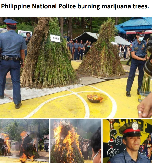 Philippine National Police burning marijuana trees - meme
