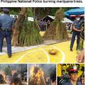 Philippine National Police burning marijuana trees