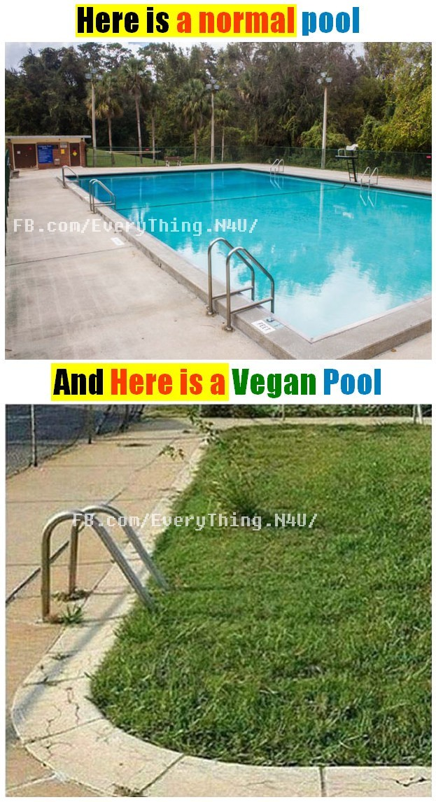 here is a vegan pool - meme