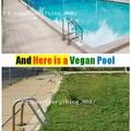 here is a vegan pool