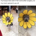 Sunflower Doggo