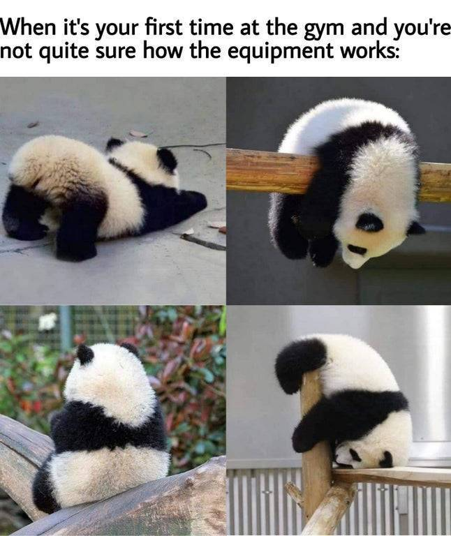 Don't get your pandas in a wad. - meme