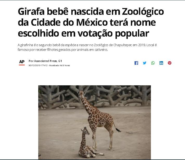 GIRAFALEZ - meme