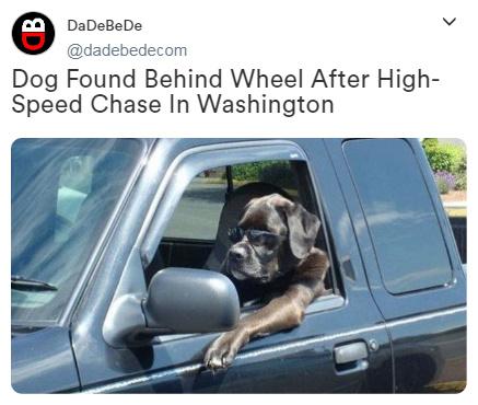 Dog Found Behind Wheel After High-Speed Chase In Washington State - meme