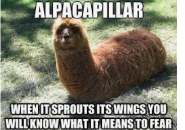 Alpaca + Caterpillar = Alpacapillar - meme