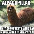 Alpaca + Caterpillar = Alpacapillar