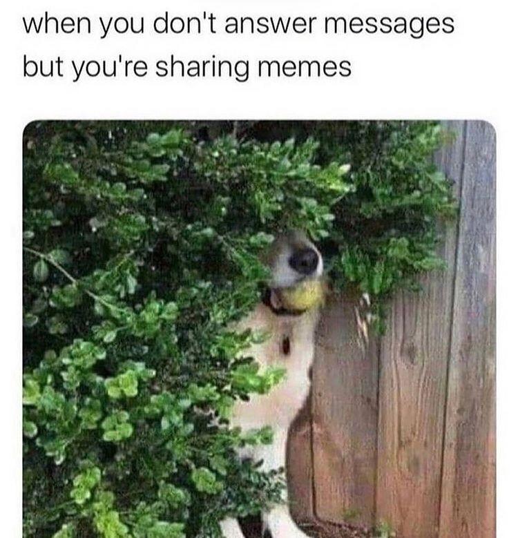 the good boy hides - meme