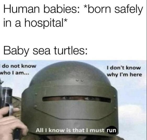 Survival of the fittest - meme