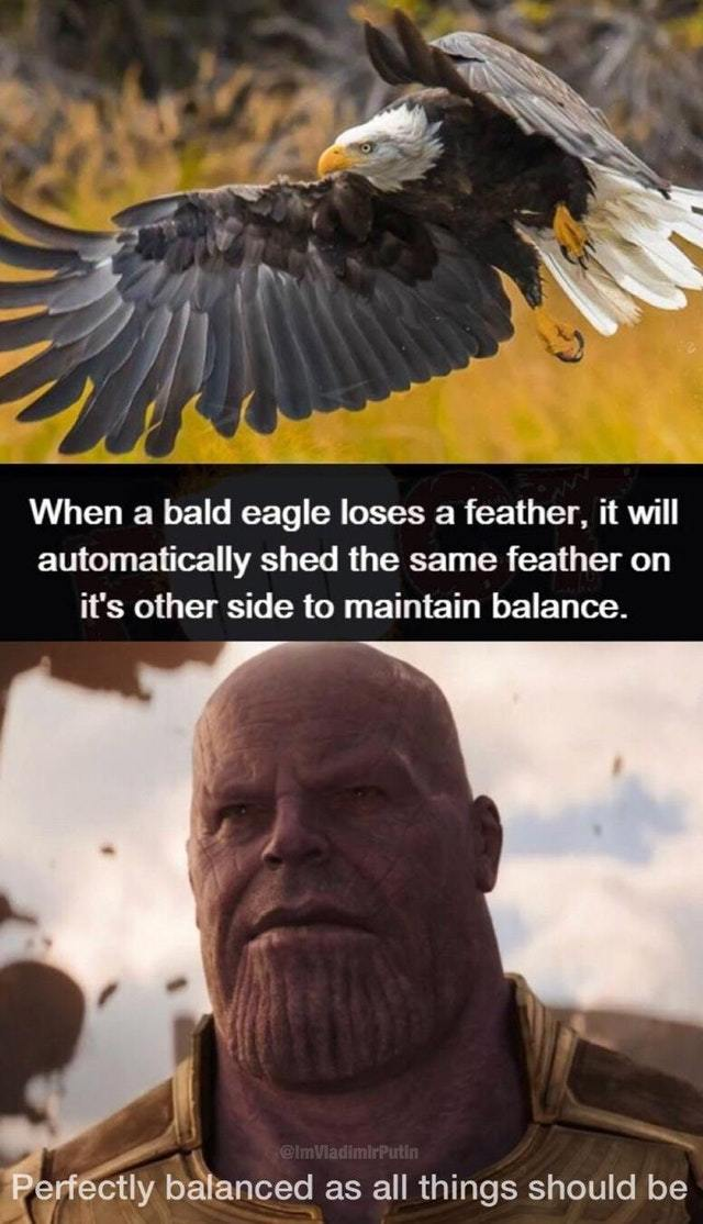 Perfect balance - meme