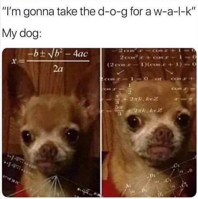 It's a ruff life being a good doggo - meme