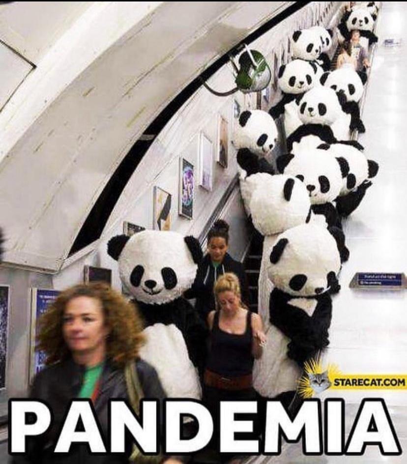 Panda e mia - meme