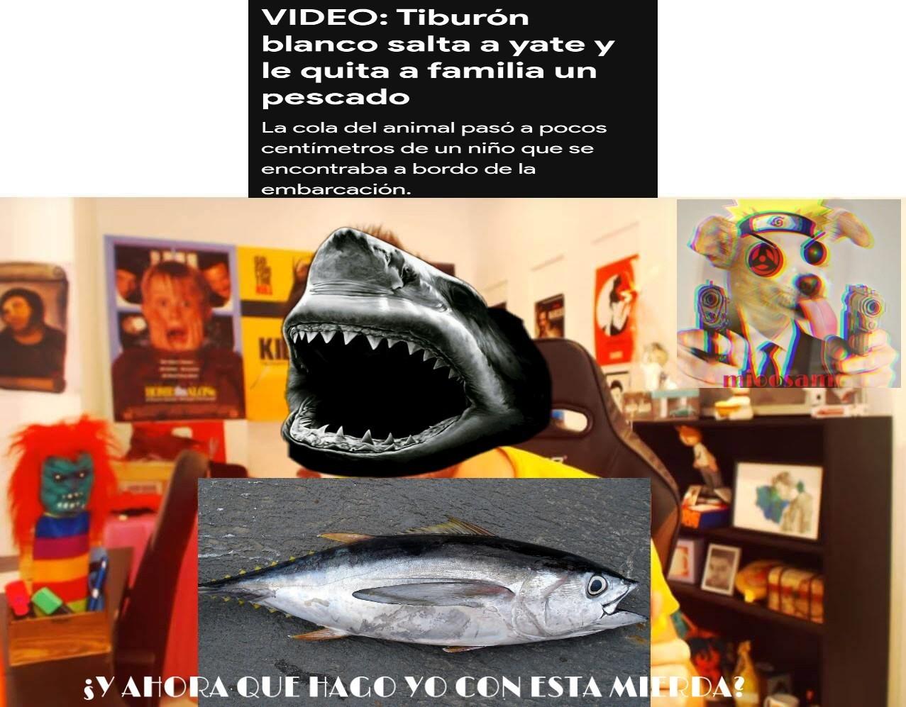 Y agarras un pescado nomas?tiburon pendejo - meme