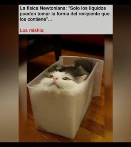 Buen gato - meme