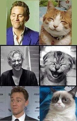 Tom Hiddleston - meme