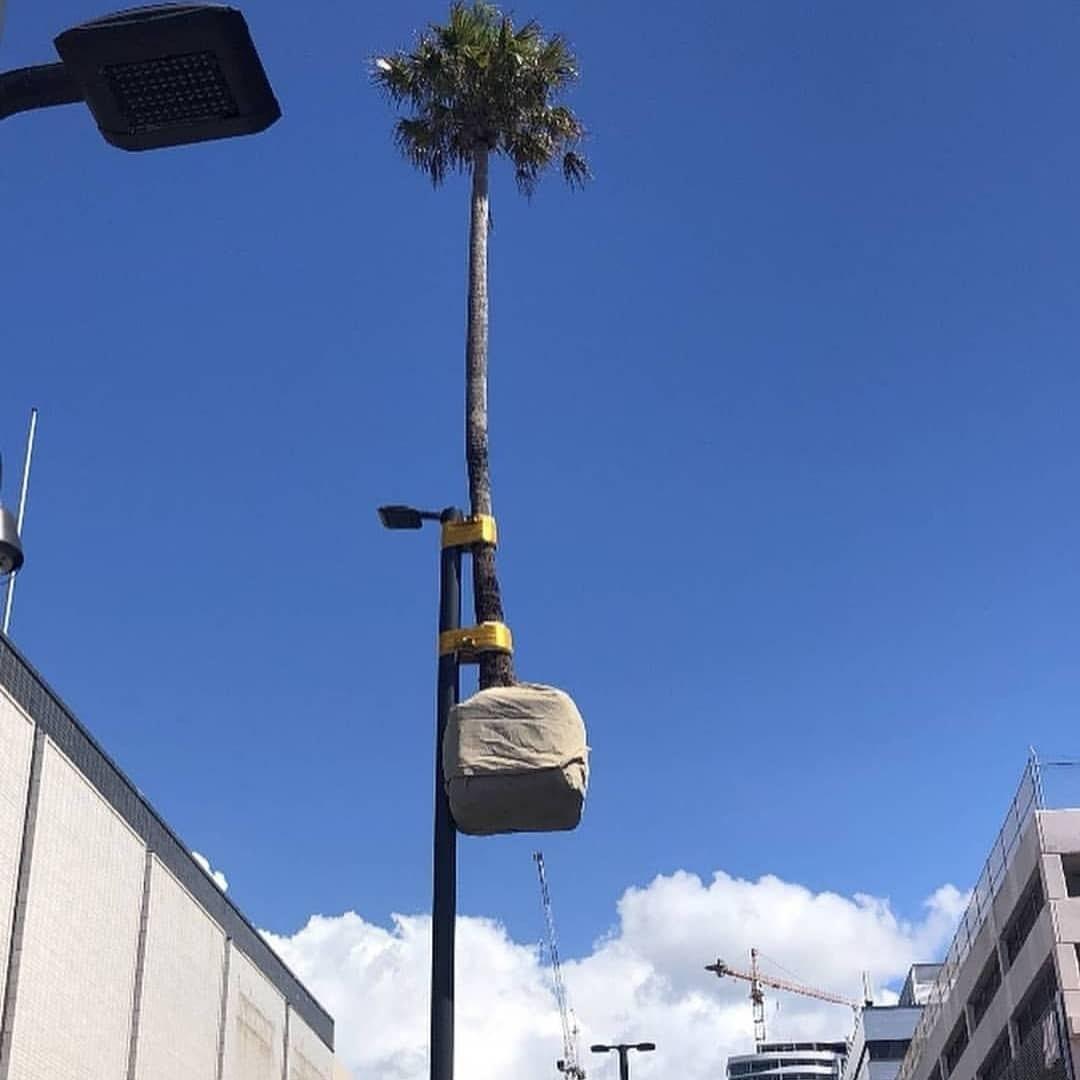 Tall trees - meme