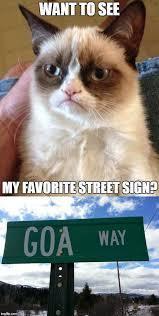 Grumpy cat loves signs - meme
