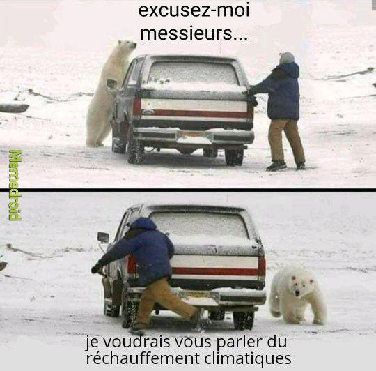 Les ours polaires - meme