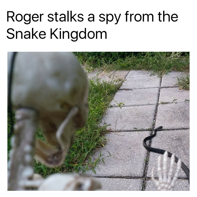 The Snakes will fall - meme