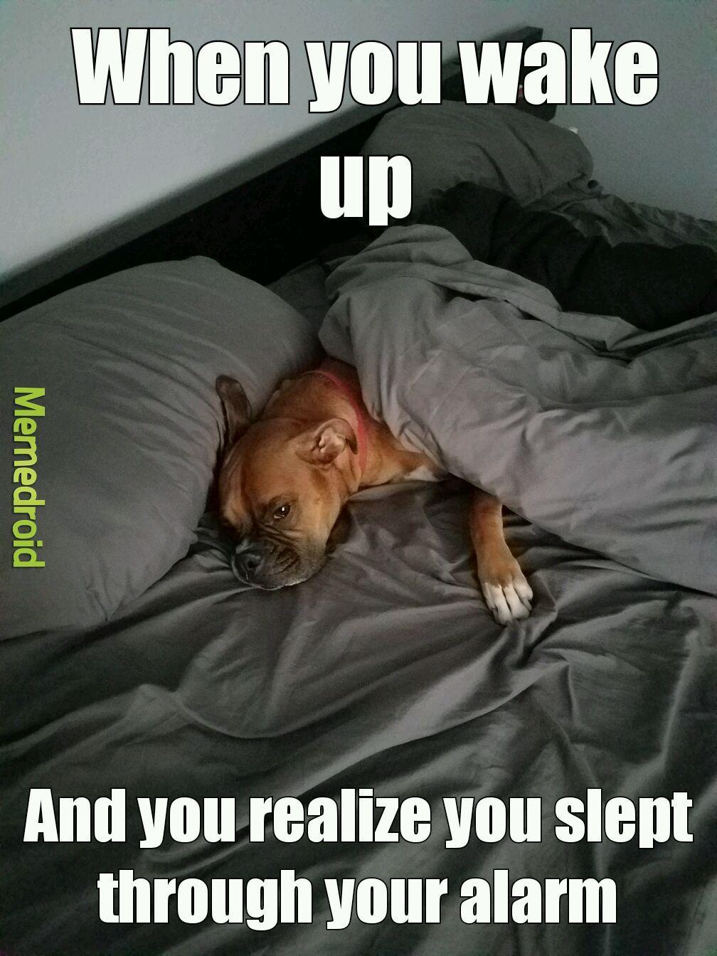Sleep sweet prince - meme