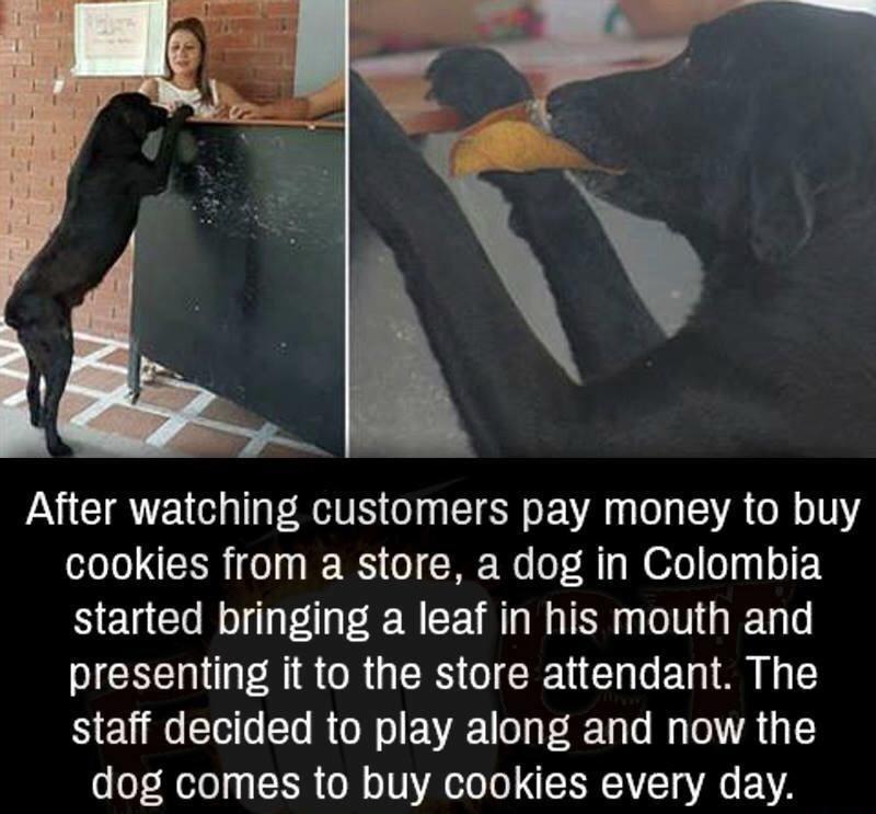 Doggo dollars - meme