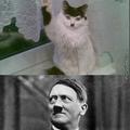 THAT'S MY CAT.....