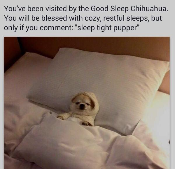 Good Sleep Chihuahua - meme