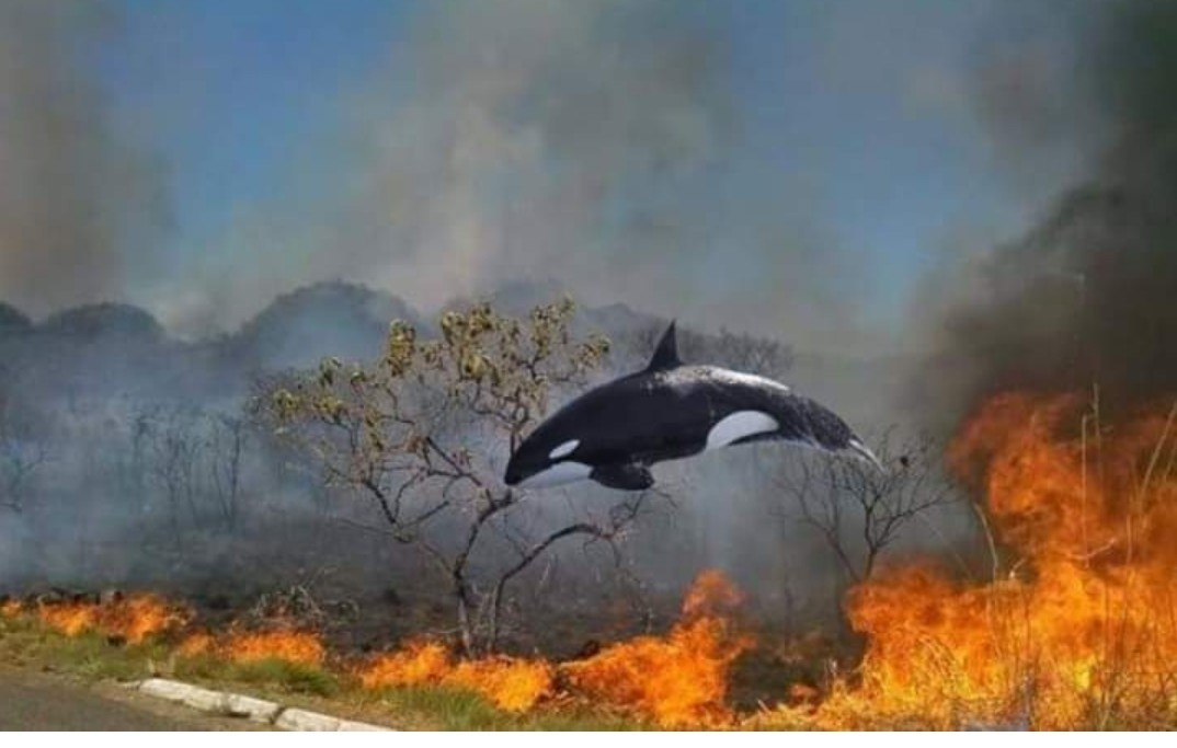 Orca amazônica fodase - meme
