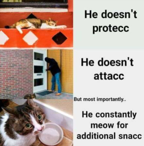 i have 6 cats and they all do that - meme