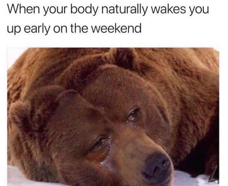 me too bear - meme