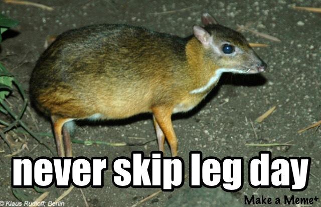 Never skip leg day - meme
