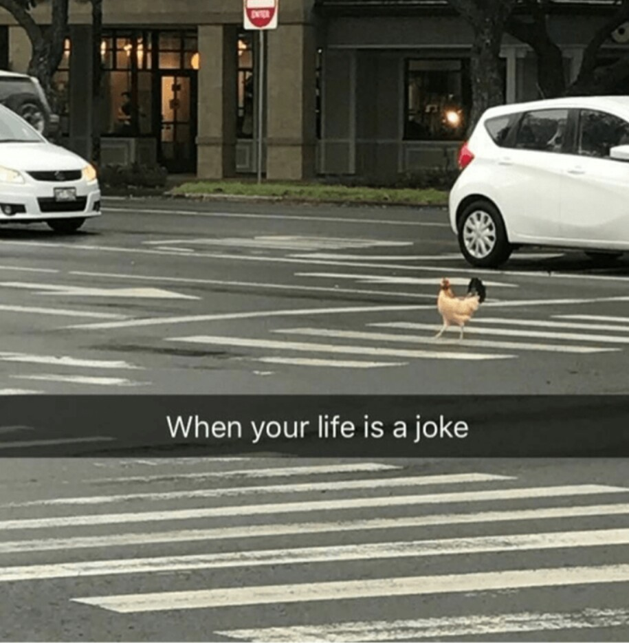 Why did the chicken cross the road? - meme