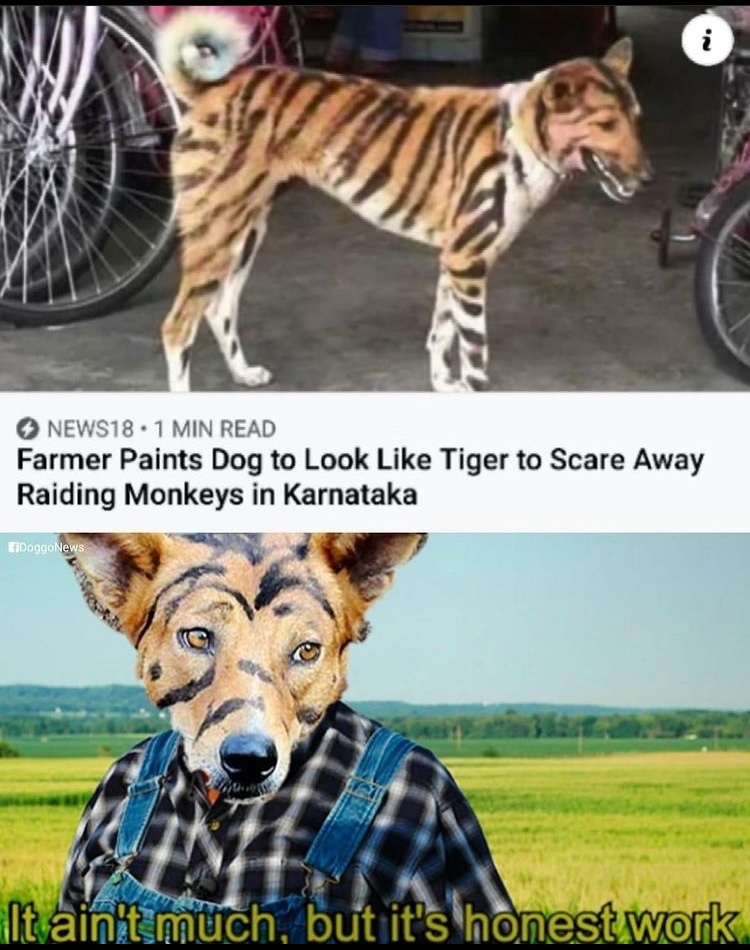 professional tiger - meme