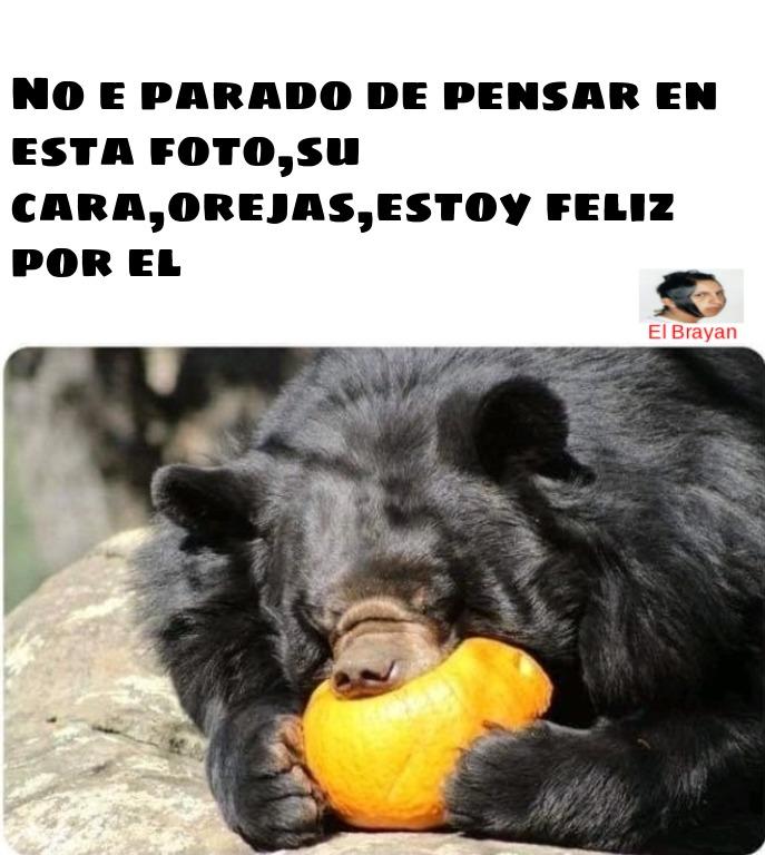 acepten por el oso cute - meme