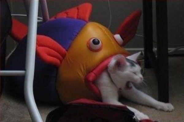 Fish - meme