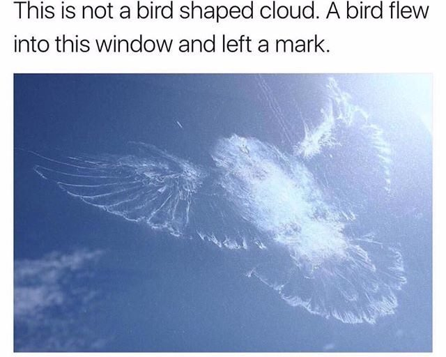 Beautiful Bird - meme