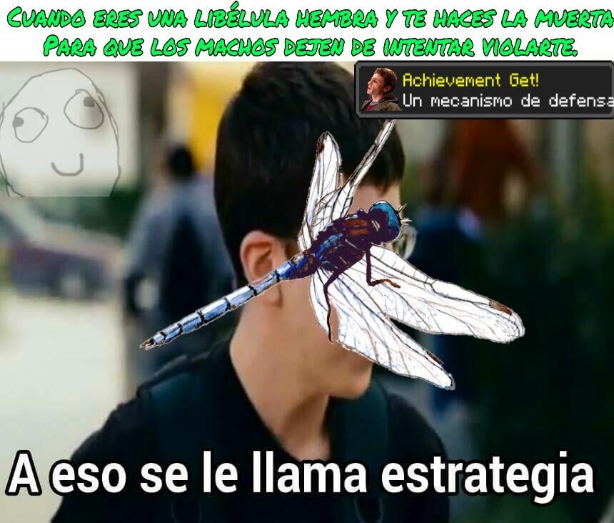Meme simple x2