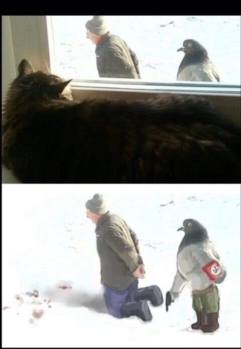 Pombos nazistas por toda parte - meme