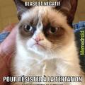 Le chat --'