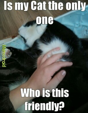 He has never scratched me - meme