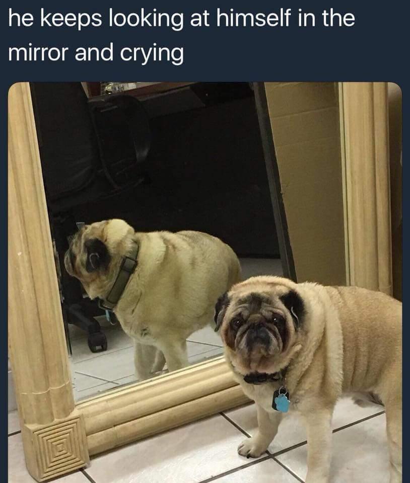 Same pupper. Same.. - meme