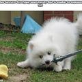 Cute doggo, Sharp  Blado