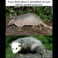 third comment is an armadillo