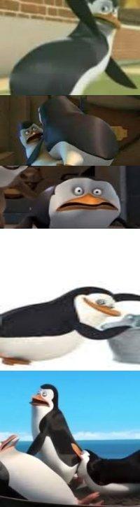 Kowalski ANAL - meme