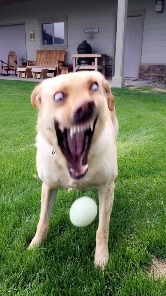 esse é meu cachorro,n roubem - meme