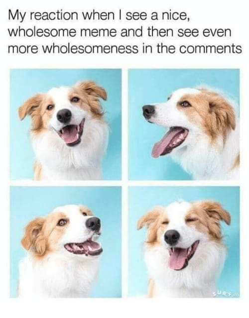 Wholesome comments only =) - meme