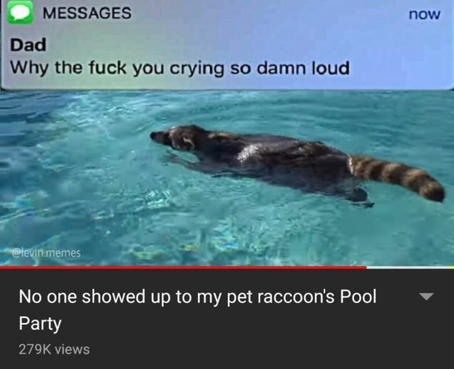No one showed up to my pet raccoon's pool party - meme