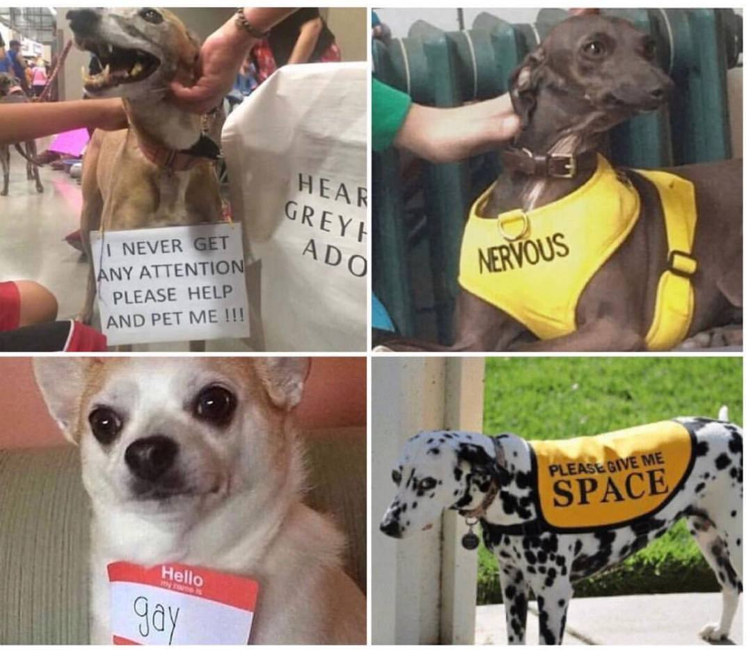 these are some dog issuses what is YOUR excuse? - meme