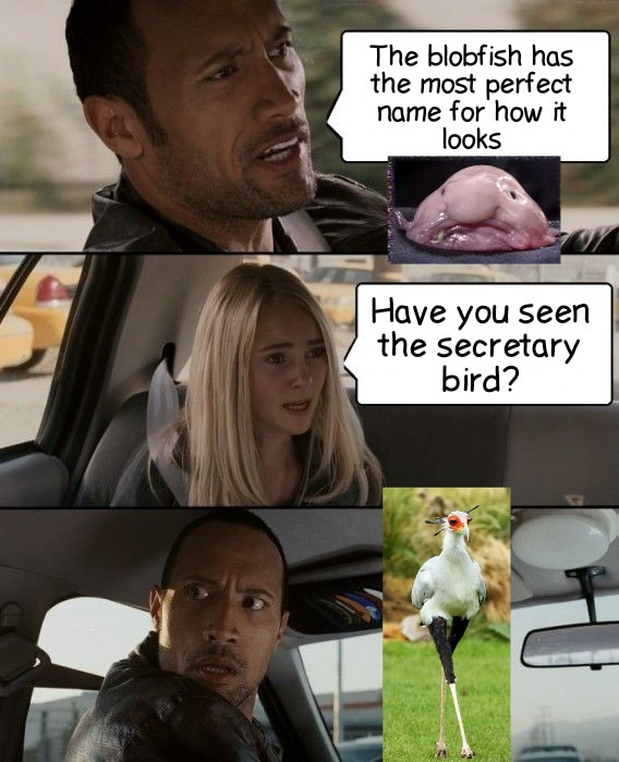 Secretary Bird - meme